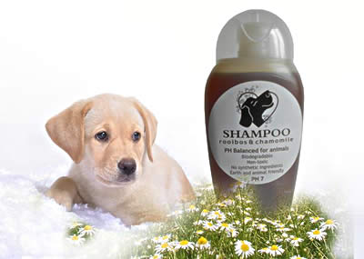Rooibos shampoo for animals